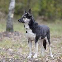 Лея - маленькая добрая собака ищет постоянный дом!, в Москве