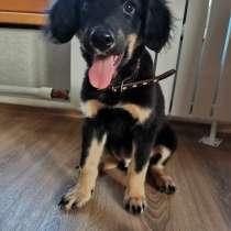 Красивый щенок, в Ангарске