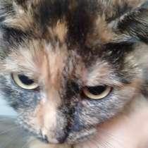 Продам кошку цена 2500тг, в г.Караганда