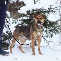Небольшая и очень ласковая собачка, в Санкт-Петербурге