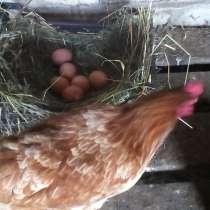 Яйца домашние куриные диетические, в Новомосковске