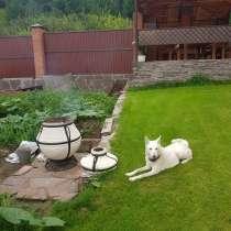 Потерялась собака, в Минусинске