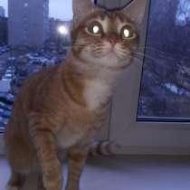 Отдам кота в хорошие руки, в Екатеринбурге