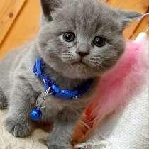 Шикарные котята есть полидактильные, в Коломне