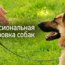 Дрессировка собак индивидуальные занятия Опытный кинолог (бо, в г.Бишкек