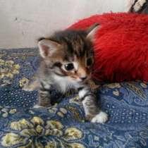 Котенок в добрые руки, в Чите