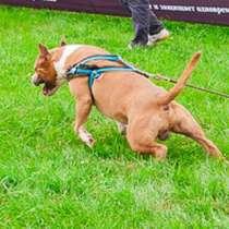 Спорт с собакой, в Комсомольске-на-Амуре