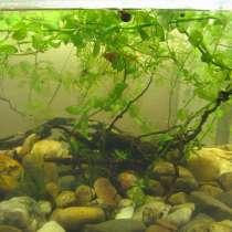 Продам аквариум, надёжный и крепкий, усиленный, в Самаре