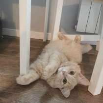 Шикарный котенок Персик в добрые руки, в Москве
