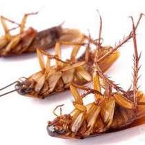 Купить отраву от клопов, купить средство от тараканов, в г.Тирасполь