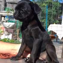 Продажа щенка, в Кургане