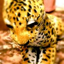 Огромная мягкая игрушка Тигр, в Калуге