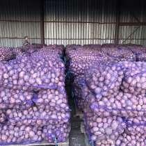 Продаем картофель Гала, Ред Леди от 20 тонн, в Далматово