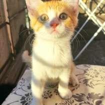 Озорные котята ищут дом срочно, в г.Мариуполь