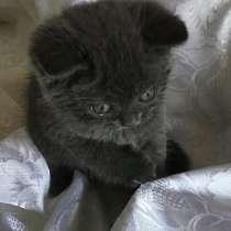 Продаётся британский котёнок, в г.Баку