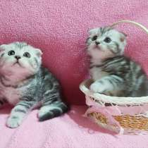 Котятки мраморятки, в г.Минск