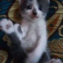 Отдам 2 котиков в добрые руки!!!, в Перми