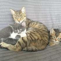 Котятки - пушистое счастье в дом!, в Одинцово