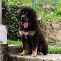 Тибетик мальчик, в Сочи