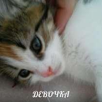 Котятки подобранные в хорошие руки, в Ярославле