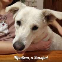Веселая собака Эльфа ищет дом!, в Москве