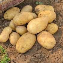 Картофель оптом, в Городце