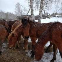 Лошади, в Стерлитамаке