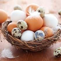 Домашние куриные и перепелиные яйца, в Чехове