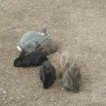 Продаю кроликов, в г.Тбилиси