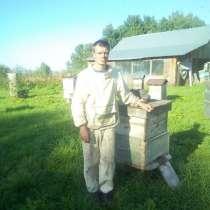 Пчелосемьи на высотку, в Бийске