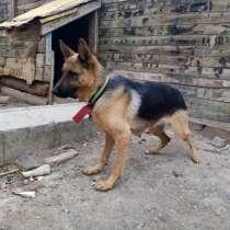 Обмен на хорошие щенков, в г.Актобе