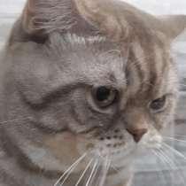 Вязка с котом, в Новочебоксарске