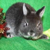 Настоящие карликовые крольчата, в Чите