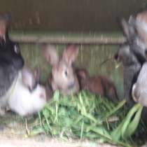 Продажа кроликов (мясо и живьём), в Рязани
