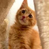 Котенок в добрые руки. Рыжий Рыжик, в Москве