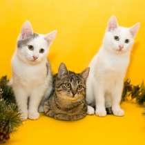 Очаровательные котейки в дар, в Москве