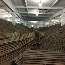 Продам картофель, в Нижнем Новгороде