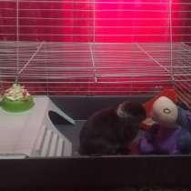 Клетка для кролика, кролик (вислоухий), в Шадринске