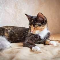 Котёнок Ириска (есть видео). Ручная и игривая, в Москве