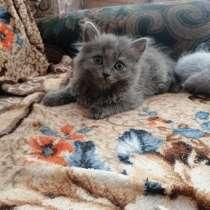 Котята даром, в Томске