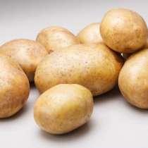 Картофель, в Кемерове