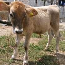Домашний скот, в г.Алматы