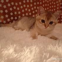 Продам котиков британских, в г.Зелёна-Гура