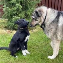Не по возрасту умный щенок, в Санкт-Петербурге