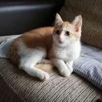 Котенок(девочка) ищет дом, в г.Могилёв