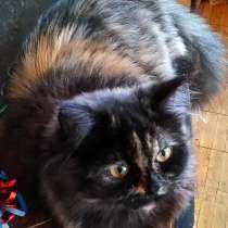 В добрые руки кошка персидская, в Нижнем Новгороде