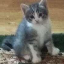 Котята- комочки счастья и их красавица мама!, в г.Талгар