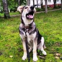 Тася - щенок в добрые руки, в Ногинске
