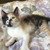 Маленькие ласковые котята кошечки. Отдам в хорошие руки, в Истре