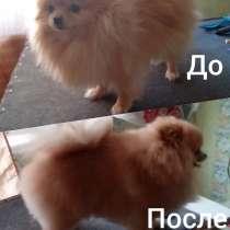Стрижка собак, в Усть-Илимске